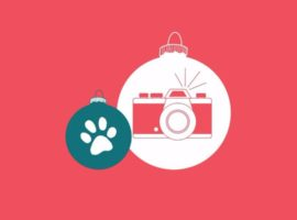 West Elm Bellevue to Offer Free Holiday Family Photo Shoot, Plus One Year Anniversary Sale