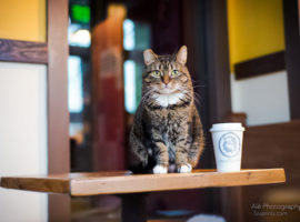 Bring a Cat Cafe to Bellevue!