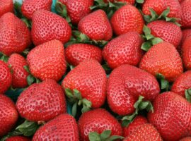 Eastside Heritage Center Cancels Bellevue Strawberry Festival